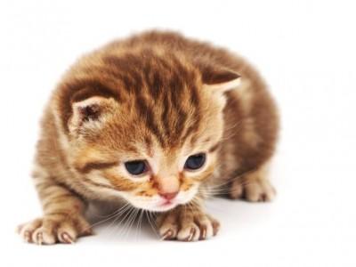 Voyage du chaton