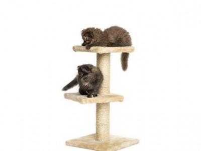 Accessoires pour chaton