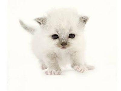 Accueillir et préparer l'arrivée d'un chaton – test 1