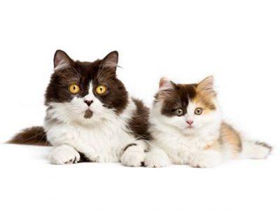 Accueillir un second chat à la maison : les secrets d'une bonne cohabitation