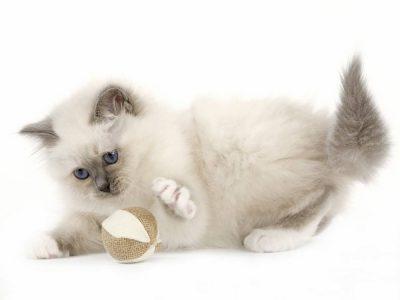 Apprentissage du chaton