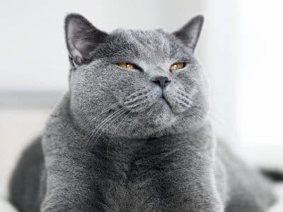 Astuces pour réduire le stress source de récidives de cystites chez le chat