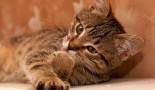 Avoir un chaton propre