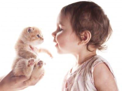 Bébé et chaton, comment faire ?