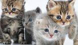 Bien gérer le sevrage du chaton