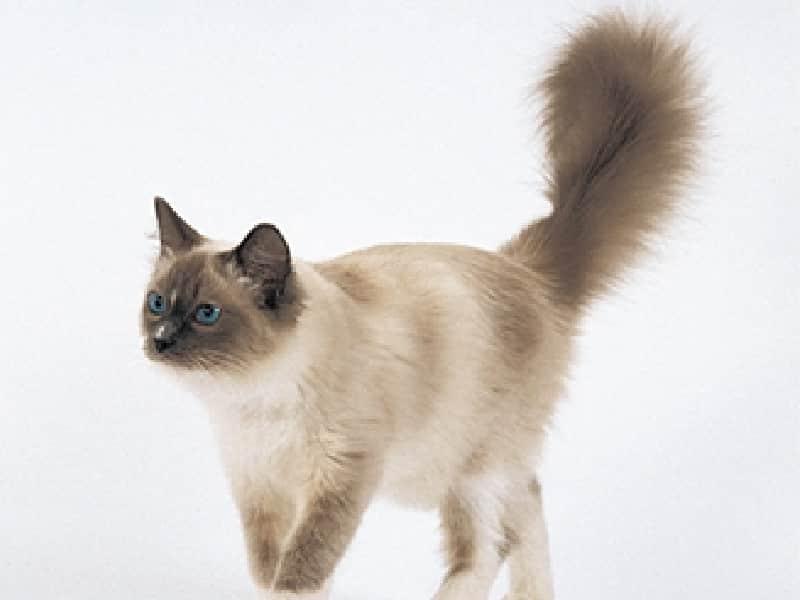 Comment stériliser mon chat ?