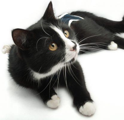 Castration du chat et stérilisation