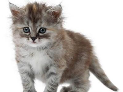 Comment bien choisir mon chaton ?
