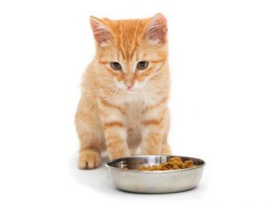 Comment nourrir un chat difficile ?