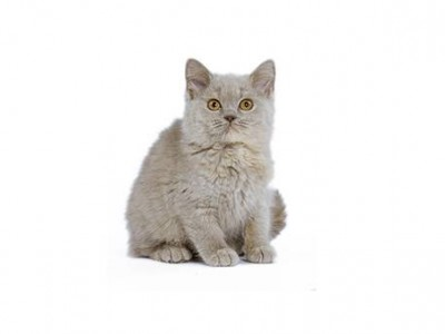 Comment prévenir l'obésité du chat ?