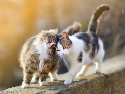 Comment reconnaitre un chat mâle d'un chat femelle ?