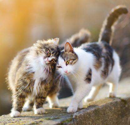 Comment reconnaitre un chaton mâle d'un chaton femelle ?