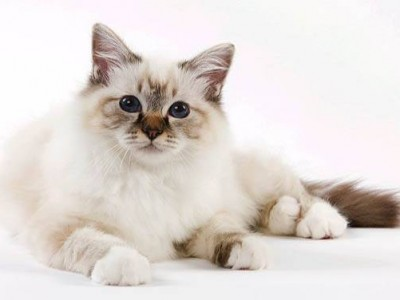 Comment savoir si un chaton est en fin de croissance ?