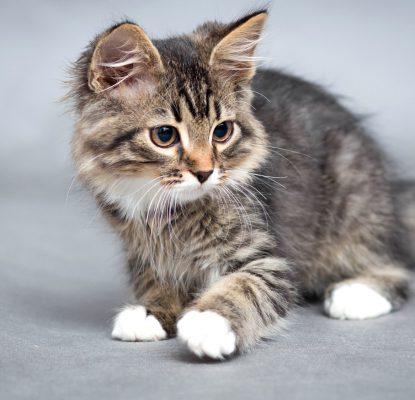 Comment soigner une plaie chez un chat ?
