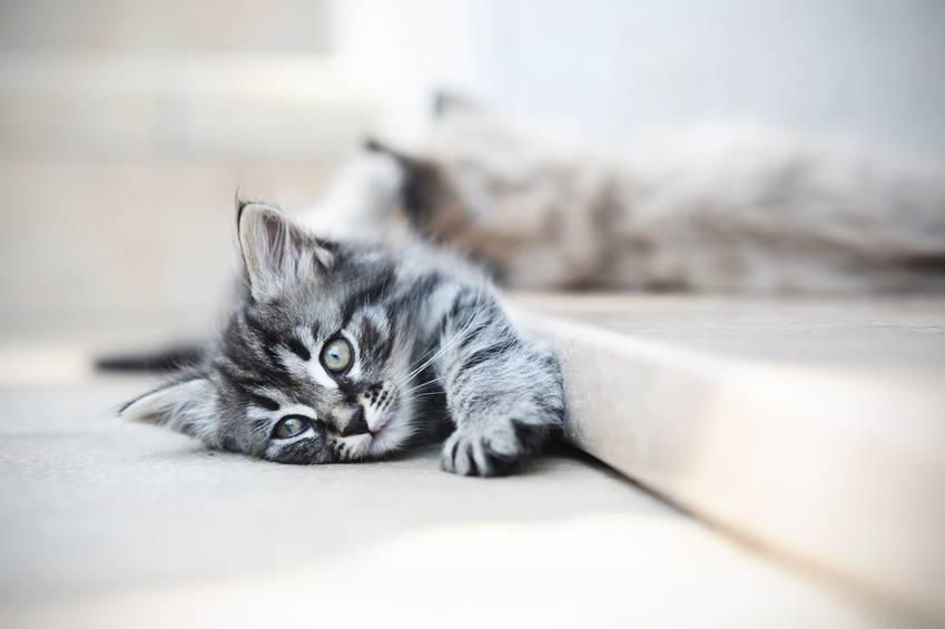 Couper les griffes du chaton