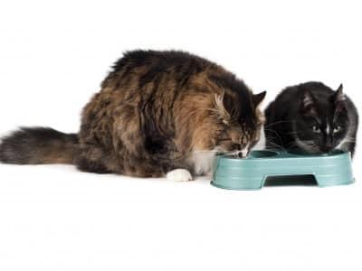 Donner le repas à plusieurs chats
