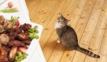 Education du chaton à table