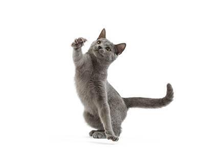 Empêcher son chaton de griffer