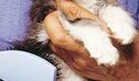 La fourrure du chaton