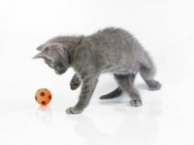Exercices pour prévenir la prise de poids du chaton