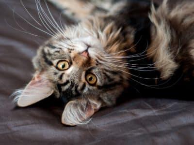 Croquettes ou Pâtées, quelle nourriture choisir pour mon chaton?