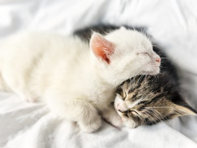 Adopter un chat ou un chaton : tout savoir sur l'adoption
