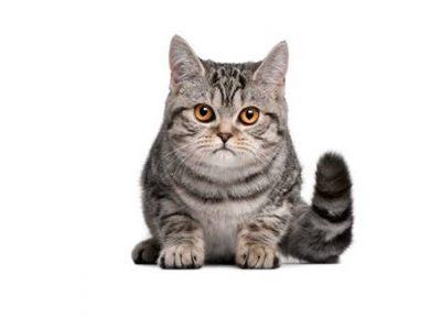 Gestion du poids chez le chaton