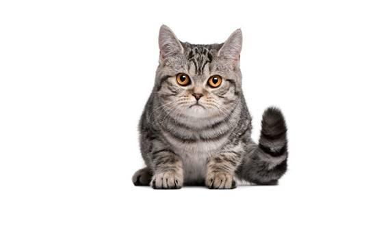https://www.wikichat.fr/wp-content/uploads/sites/2/gestion-du-poids-chez-le-chaton_1-2.jpg