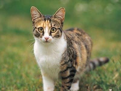 Les changements hormonaux du chat stérilisé