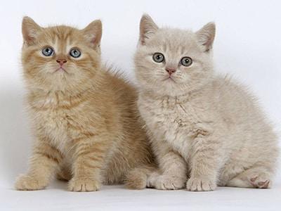 Idées de prénom de chaton