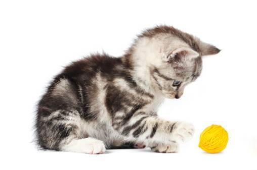 Idées de jeux pour chaton