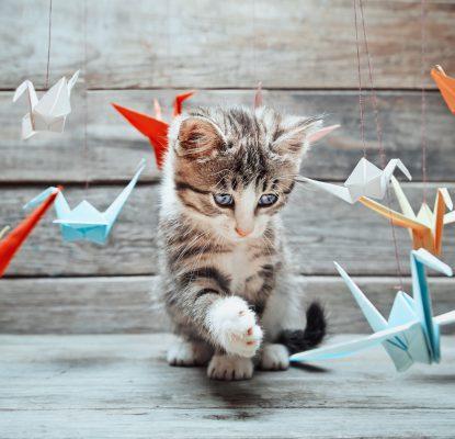 Idées de jeux pour mon chaton