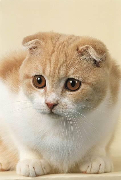Les moustaches du chaton