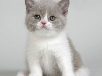 L'accueil du chaton