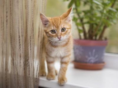 Arrivée du chaton