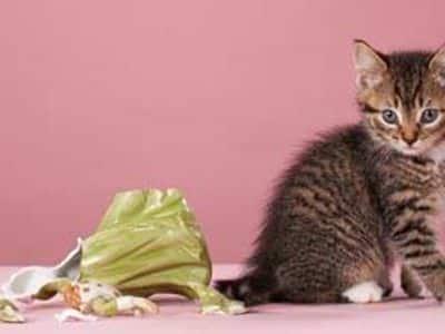 L'éducation du chaton