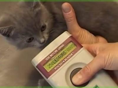 L'identification du chaton, un geste sécuritaire