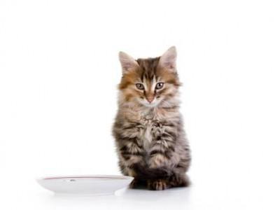 L'inappétence chez le chaton