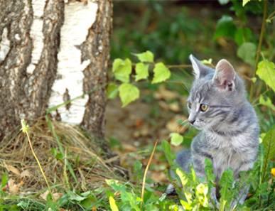 La chasse chez le chaton