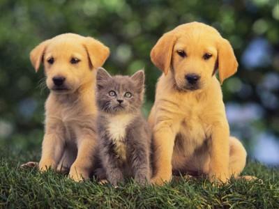 La communication entre chaton et animaux