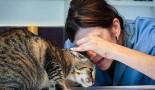 La gale des oreilles : une cause fréquente d'otite chez les chats