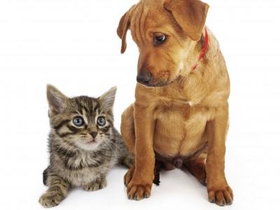 Chaton et autres animaux