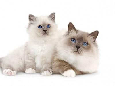 La séparation du chaton