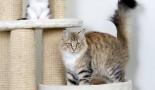 La « teigne » du chat