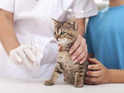 Quels vaccins mon chaton doit-il recevoir ?
