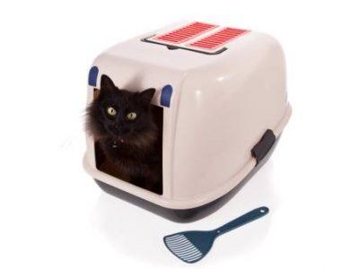 Le bac à litière et le chaton