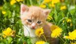 Le coryza du chat