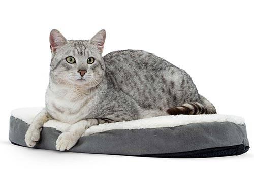 Comment choisir le panier du chat et où l'installer ?