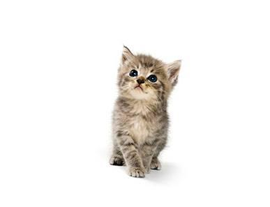 Le passeport pour le chaton