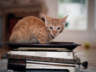 Le poids du chaton